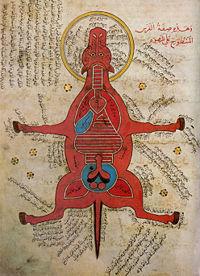 Mittelalter Anatomie Pferd